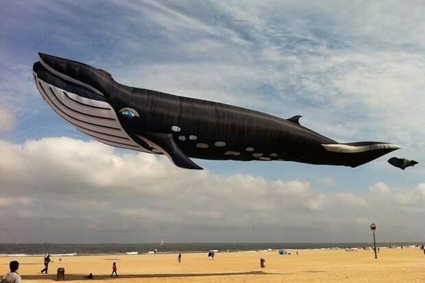 Это похоже на Photoshop, а не на 27-метрового воздушного змея