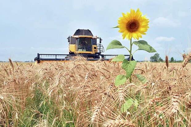 Украина: от житницы СССР и «аграрной сверхдержавы» до списка голодающих стран по версии ООН