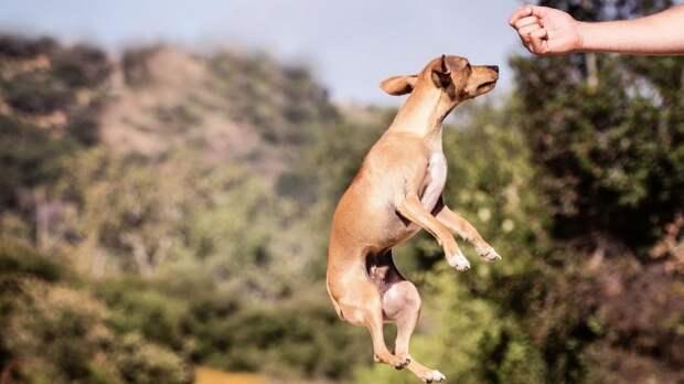 В США выяснили, как взаимодействие с собаками помогает студентам побороть стресс
