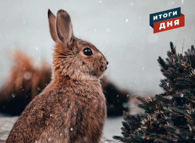 Итоги дня: обустройство перголы на Центральной площади Ижевска и прогноз погоды на выходные