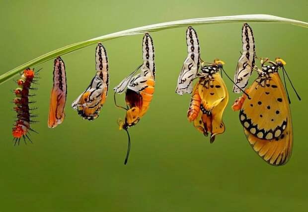 Изменчивость, информация, и сотворенный род
