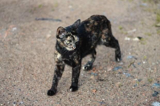 Боевой Хвостатые, братья наши меньшие, город, кот, кошка, улица, уличные кошки, эстетика