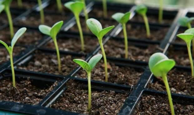 1. Сроки посадки дача, овощи, огород, растения, советы, урожай