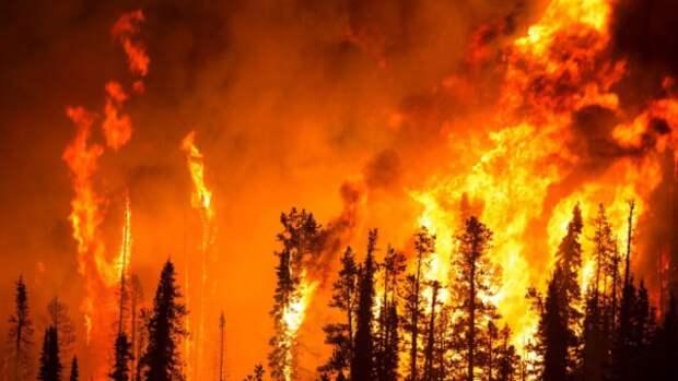 Древние люди сознательно сжигали леса еще 93 тысячи лет назад