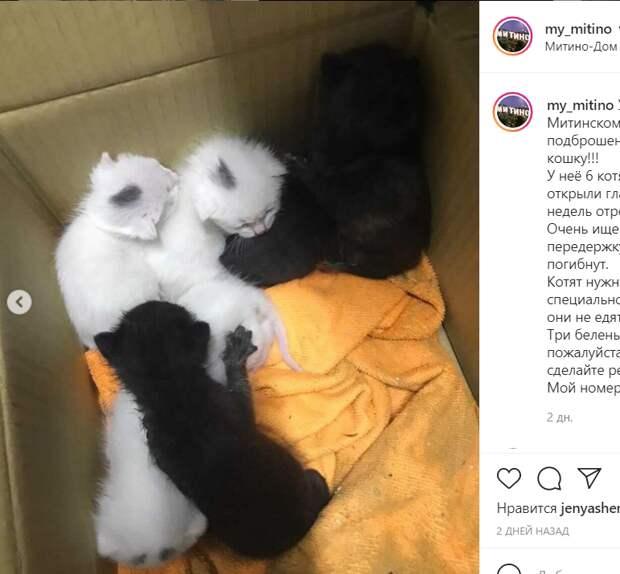 Неравнодушные жители ищут в Митине дом для котят-сирот