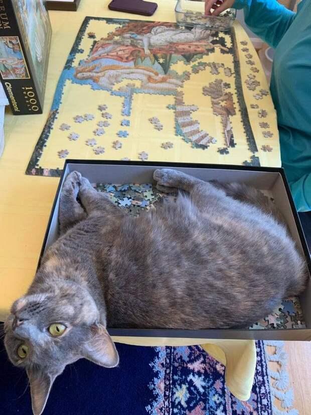15 чудных котов, у которых своя атмосфера