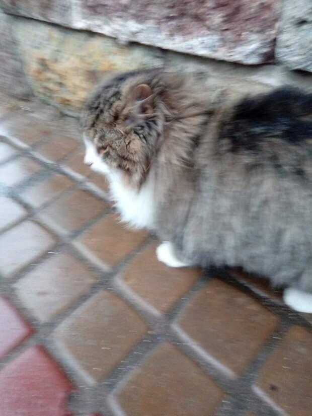 Кто-то выбросил трёх ручных кошек. Они замерзают и очень голодные. Умоляем вас о любой помощи!!!