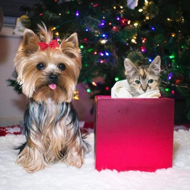 Винни помогла уже многим животным, которых приводила домой хозяйка интересное, кошки, собаки, спасение