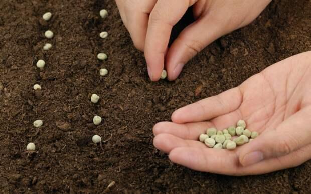 Рассказываю, что нужно знать при покупке семян