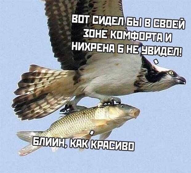 Подборка картинок. Вечерний выпуск (31 фото) - 19.02.2020