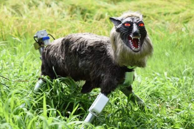 В Японии придумали роботов-волков, чтобы отпугивать медведей