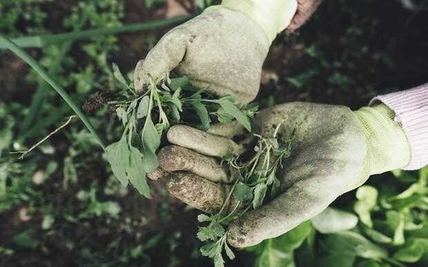 Хозяина земельного участка привлекли к ответственности за растущие сорняки и кустарники