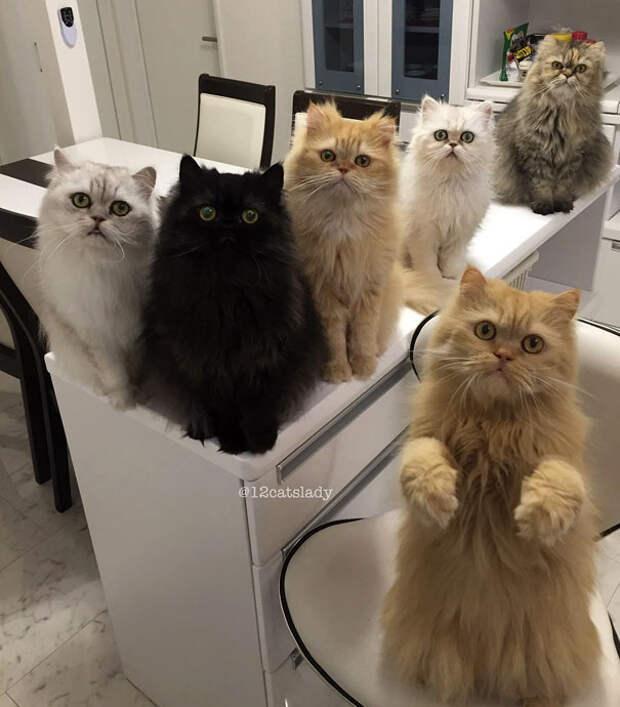 1. Жизнь девушки, приютившей 12 котов животные, жизнь, кот, питомец, семья, собака, фото