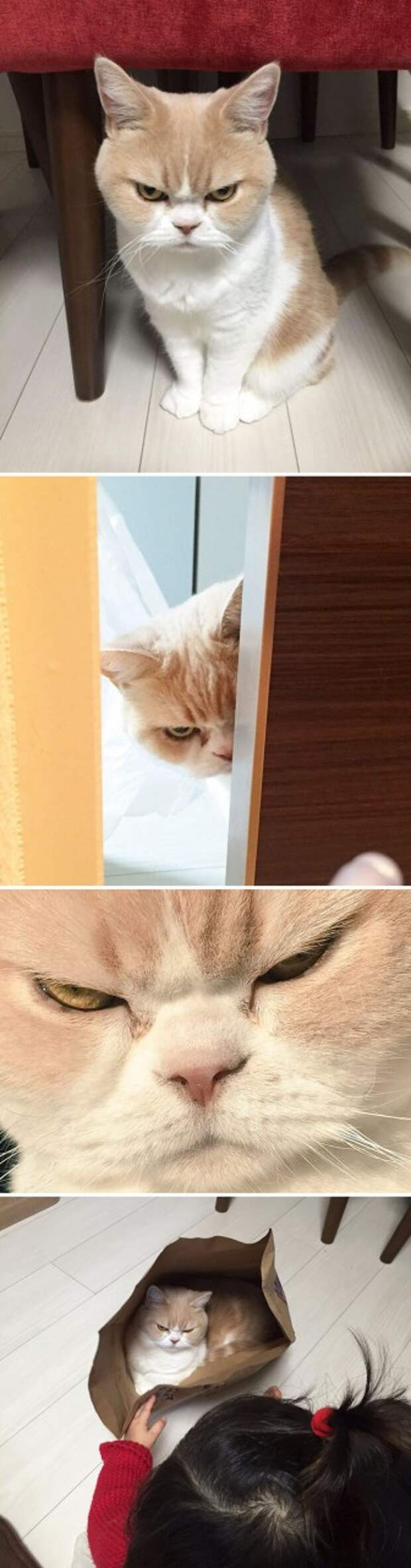3. Пугающий взгляд.