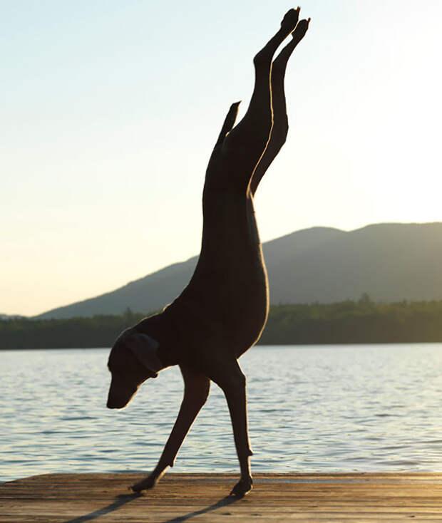 Безупречность животные, йога, милота, прикол, фото