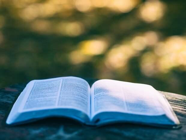 Пятно, Книги, Боке, Колледж, Образования, Знаний