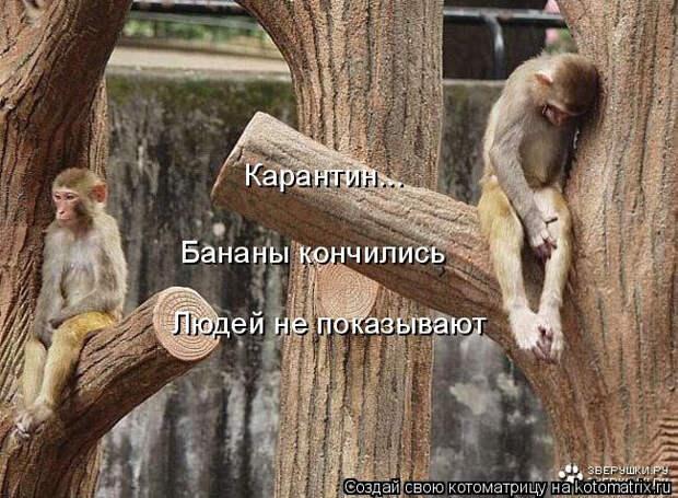 kotomatritsa_7 (650x478, 253Kb)