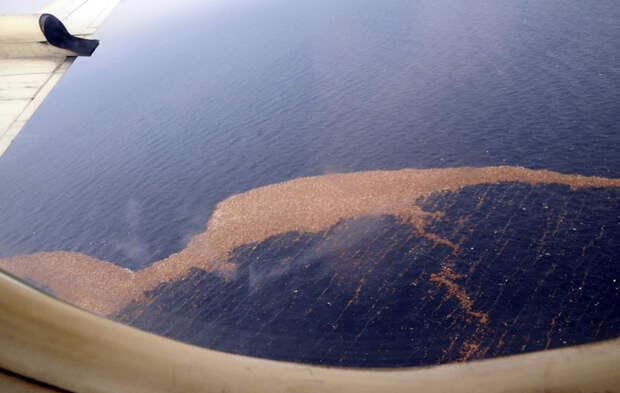 Радиоактивный мусор после Фукусимы достигает Западного побережья Северной Америки