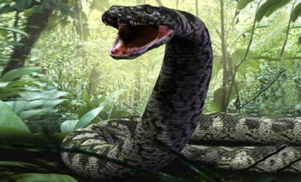 Змеи-гиганты из прошлого, которые охотились даже на динозавров