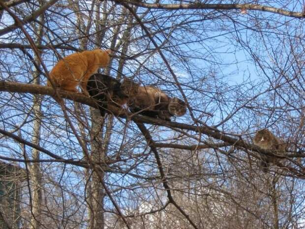 Кошачий оркестр в сборе. весна, коты, прикол