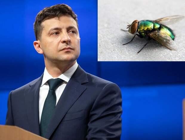 Большая ЗЕлёная муха летит в Вашингтон требовать денег