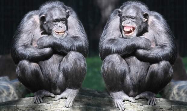 Блог Павла Аксенова. Анекдоты от Пафнутия. Фото vladvitek - Depositphotos