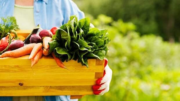 Дачный гороскоп: как вырастить богатый урожай