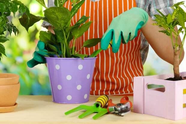 Аспирин и еще 6 способов заставить комнатные растения расти как на дрожжах