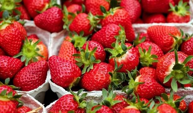 Как тюменцам выбрать вкусные сезонные ягоды