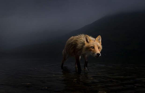 16 впечатляющих снимков дикой природы, победителей конкурса Wildlife Photographer Of The Year 2021