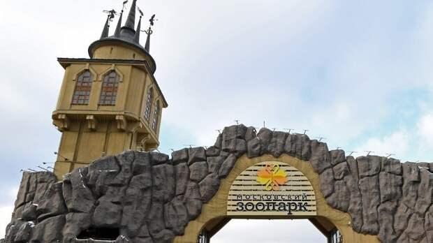Сурикаты вернулись в уличный вольер в Московском зоопарке