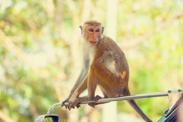 Что известно о вакцине от коронавируса для домашних животных?