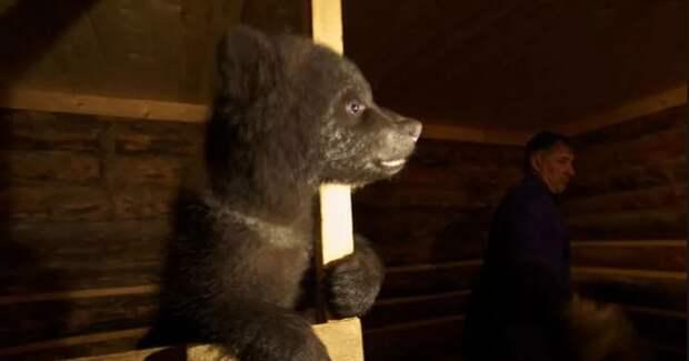 Биолог Валентин Пажетнов организовал приют для медвежат-сирот Биолог, Пажетнов, приют для медвежат