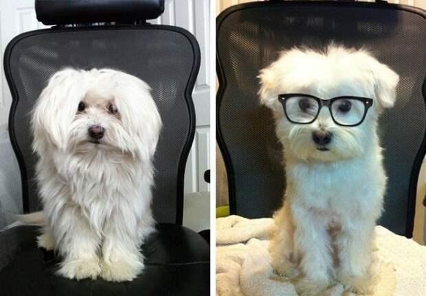 Лохматые собаки до и после стрижки