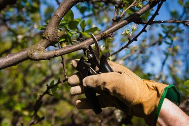 Во дворе на Вучетича провели обрезку сухих деревьев