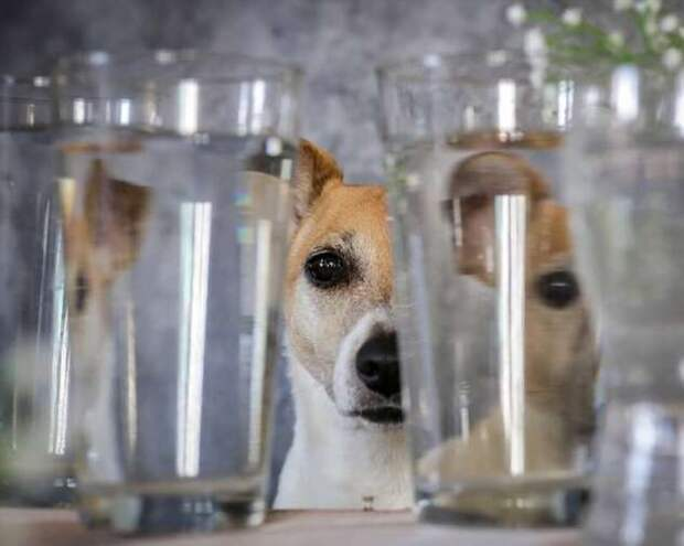Что будет, если посмотреть на животных через стеклянные предметы (18 фото)