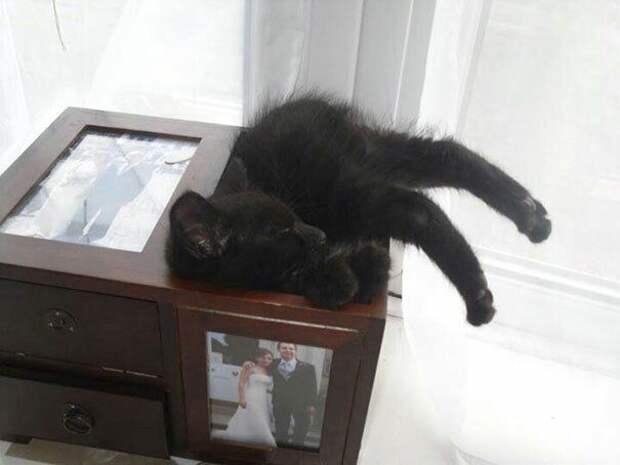 Это – кот, ему так удобно!