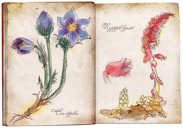Магические травы в славянской культуре