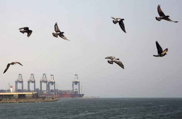 Арабо-Персидский залив как регион процветания и мира