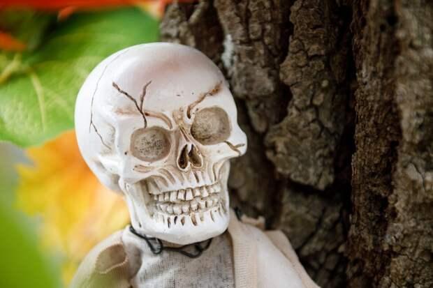 В Подмосковье нашли прикованный к дереву скелет