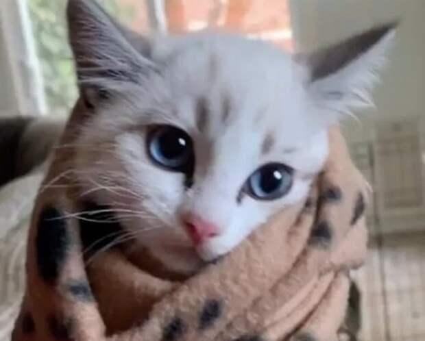 Застенчивый бездомный котёнок отказывался идти в руки, а лишь шипел, боясь довериться человеку
