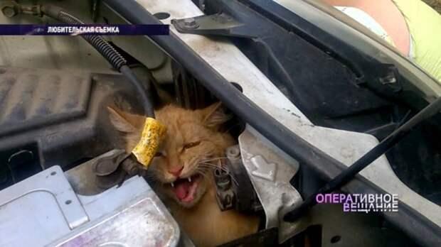 В Ярославле спасли кота, который почти весь день проехал под капотом автомобиля