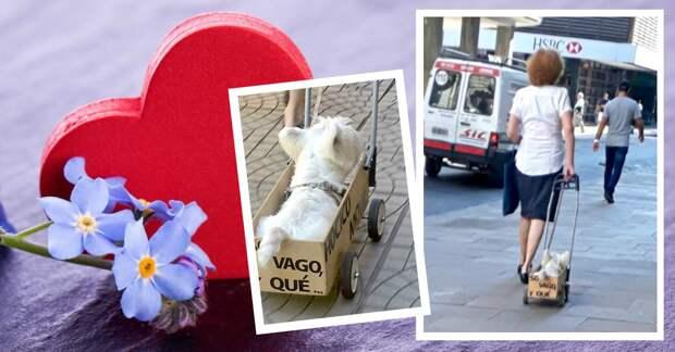 Понурого пса тащили в ящике со странной надписью. Люди подошли посочувствовать — и опа!..