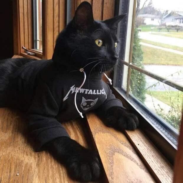 Кот в футболке Metallica