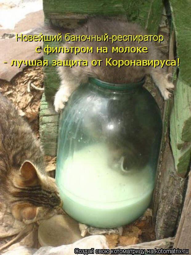 kotomatritsa_5g (525x700, 270Kb)