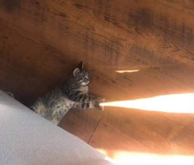 Кот и лучики солнца