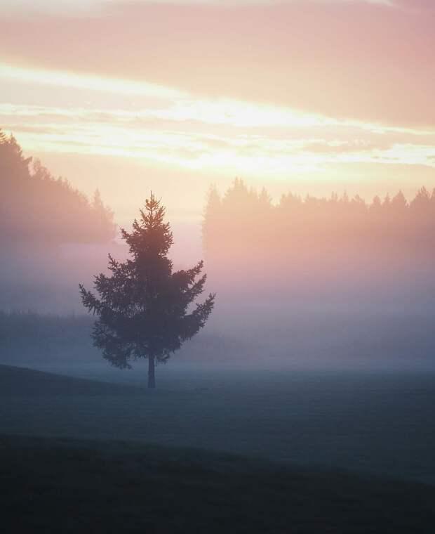 Природа на снимках Сандры Линнелл