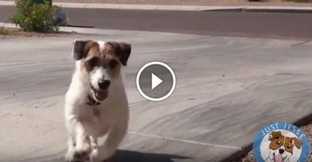 Эта собачка настолько умна, что даже попала в Книгу рекордов Гиннесса