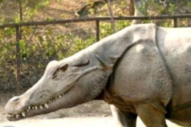10 странных животных созданных человеком
