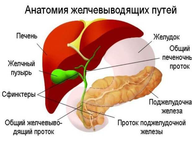 Застой в желчном - боль в сердце и суставах